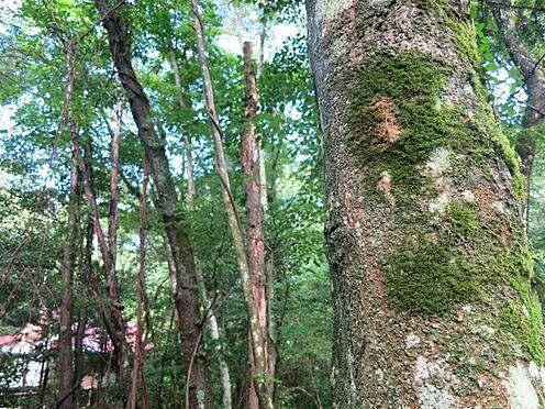 土地-北佐久郡軽井沢町大字長倉 よく見てみると木に苔がありました。これこそ軽井沢という雰囲気でしょう。